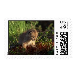 Tiny Baby Lynx Stamps