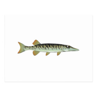 Tiny baby muskie Vector Art Fish Farm Postcard