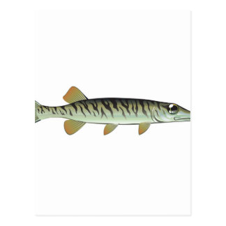 Tiny baby muskie Vector Art Fish Farm Postcard
