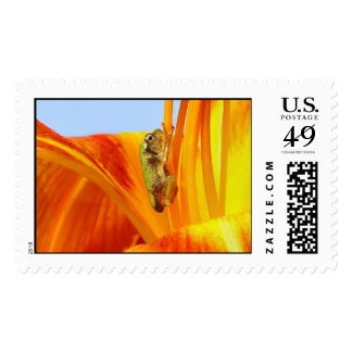 Tiny Baby Tree Frog on Lily Flower Postage