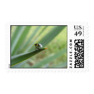 Tiny Beetle--Big World Postage Stamps