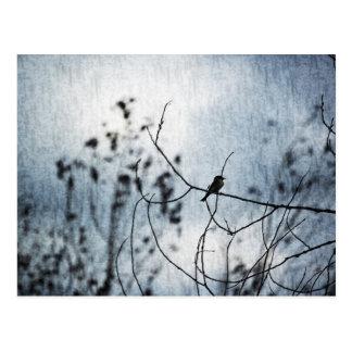 Tiny Bird Silhouette Postcard