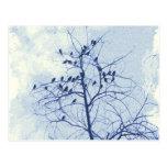 Tiny Birdies in the Treetop Post Card