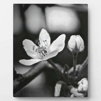 Tiny Black and White Flower Plaque