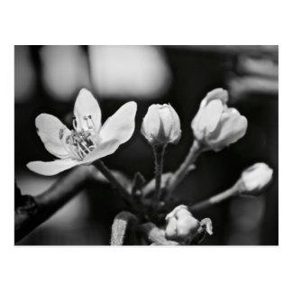 Tiny Black and White Flower Postcard