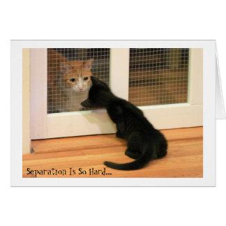 Tiny Black Kitten and Orange Tabby Cat Card