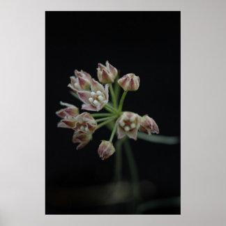 Tiny Blossom Poster