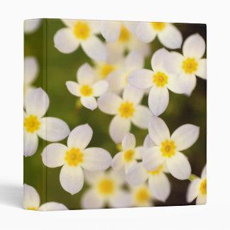 "Tiny Bluet Wildflowers 1"" Photo Album Binder"
