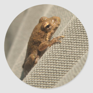 Tiny Brown Frog Classic Round Sticker