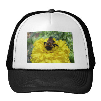 Tiny Bumble Bee Collecting Honey And Pollen From B Mesh Hat
