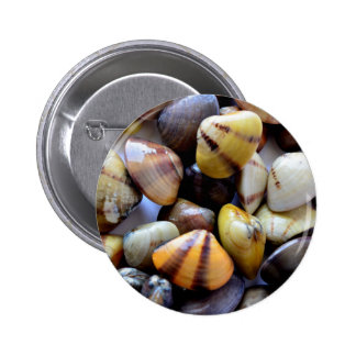 Tiny Colorful Clam Shells Pinback Button