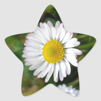 Tiny daisies star sticker
