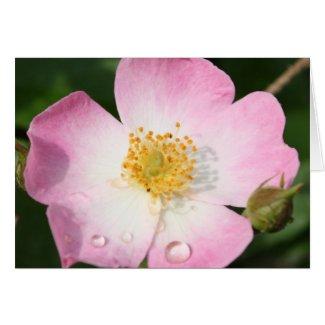 """""""Tiny Dancer"""" Ballerina Rose Photography Greeting Card"""