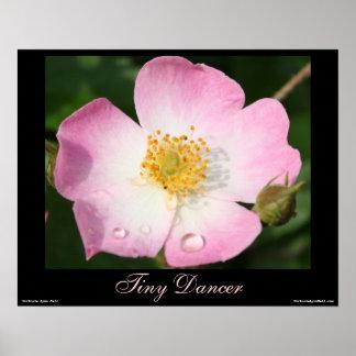 Tiny Dancer - Ballerina Rose Photography Poster