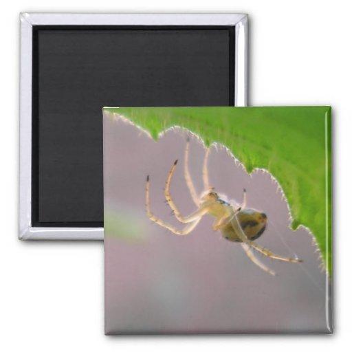 Tiny Desert Spider - Magnet #1