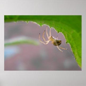 Tiny Desert Spider - Poster print