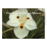Tiny Face of Mother Nature Greeting Cards