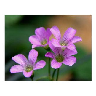 Tiny Flowers Postcard