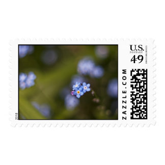 Tiny forget me not flower postage