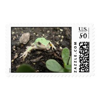 Tiny Frog Postage