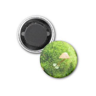 Tiny Fungi 1 Inch Round Magnet