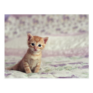 Tiny Ginger Kitten Postcard