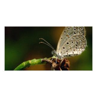 Tiny Grass Blue Zizula Hylax Butterfly Customized Photo Card