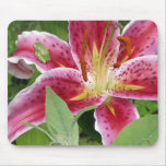 Tiny Green Frog on Stargazer Lily Mouse Pads