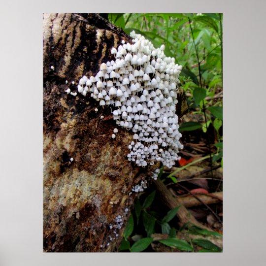 Tiny Hawaiian Fungi Poster