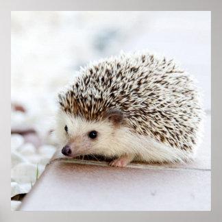 Tiny Hedgehog Poster