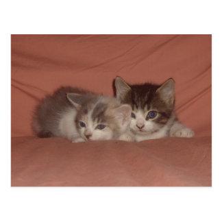 Tiny Kitties Postcard