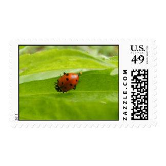 Tiny Ladybug Postage Stamps