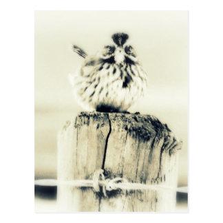 Tiny Little Backyard Bird Postcard