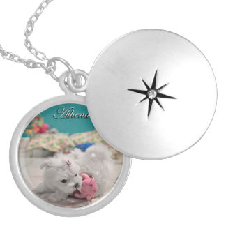 Tiny Maltese Puppy Playing on a Pendant