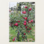 "Tiny mature apple tree with elstar Dutch apples Planner<br><div class=""desc"">Taken in a garden in my village.</div>"