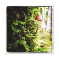 Tiny Mushroom - Canvas Canvas Print