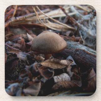Tiny Mushroom Coaster