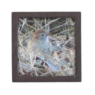 Tiny Nesting Field Sparrow - Secret Box