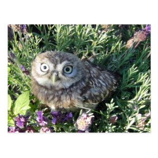 Tiny Owl Postcard