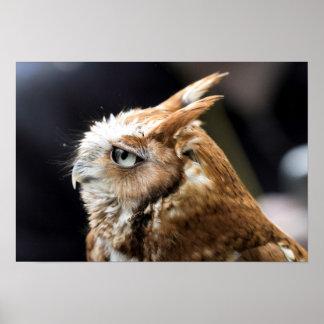 Tiny Owl Poster