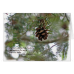 Tiny pine cone: Every walk w/nature... John Muir Greeting Cards