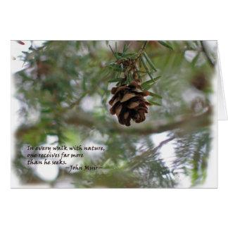 Tiny pine cone: Every walk w/nature... John Muir Card