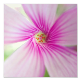 Tiny Pink Flower Photo Print