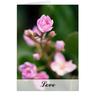Tiny Pink - Love