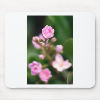 Tiny Pink Mousepads