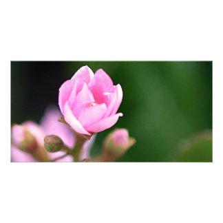 Tiny Pink Photo Card