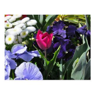 Tiny Pink Tulip Postcard