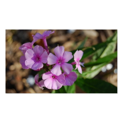 Tiny Purple Flowers - Business Double-Sided Standard Business Cards (Pack Of 100)