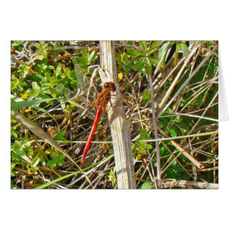 Tiny Red Dragonfly in November Card