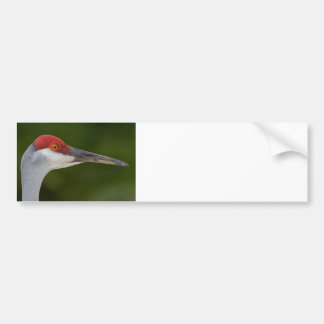 Tiny Red Feathers Car Bumper Sticker